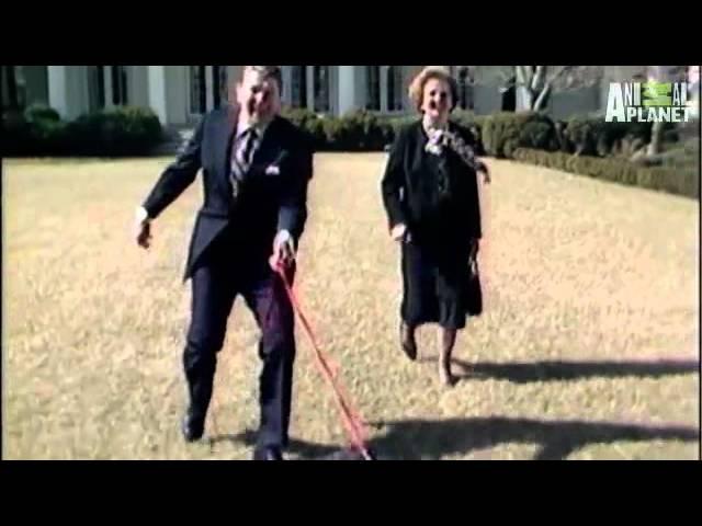Dogs 101 - Bouvier Des Flandres