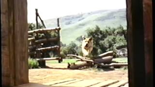 Sleeping Beauty (1959) - Old Yeller (1957) - The Jungle Book (1967) Trailer (VHS Capture)