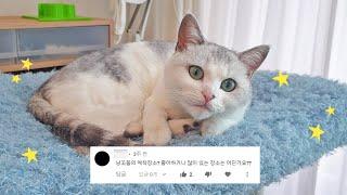 Q.고양이들이 좋아하는 곳은 어디예요?🏡요기예요!