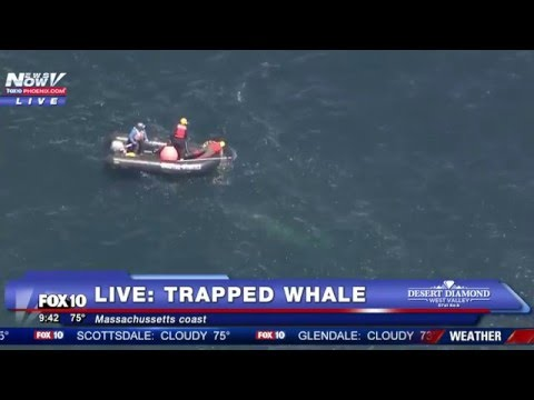 FNN: Whale Trapped Off Massachusetts Coast - Rescue Operation Underway