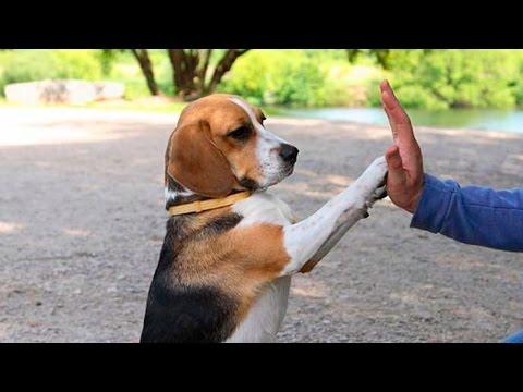 Funny Dog Tricks #13