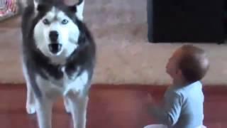 Разговор собаки и малыша))