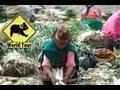 Arapicos Ecuador Vídeos De Viajes