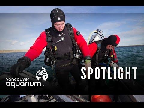 Arctic Talkshow - Jeremy Heywood – Dive Safety Officer (Northern Spotlights)