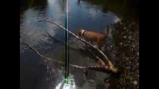 Dog with the biggest stick Thumbnail