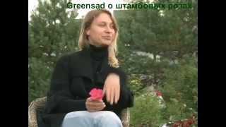 видео Штамбовые розы