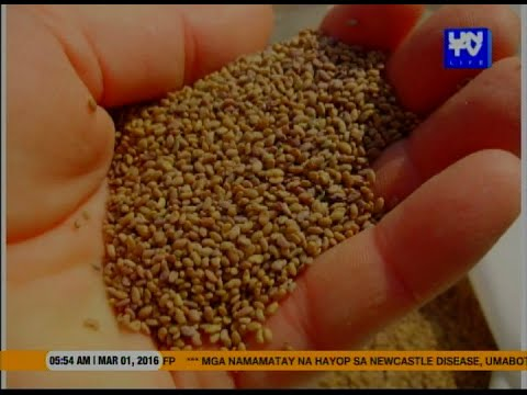 Good Morning Kuya : Super seed that can prevent heart attack