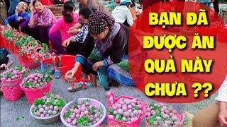 DTVN - Quá kích thích trước những quả MẬN TAM HOA BẮC HÀ tại Bắc Hà Lào Cai