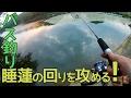 【バス釣り】睡蓮の周りを攻めてみる!
