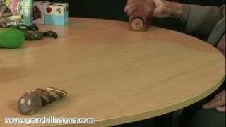 Wood  Worm