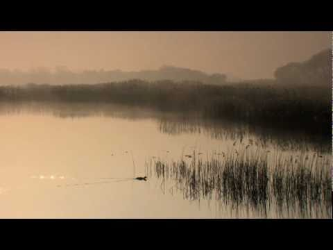 Shapwick National Nature Reserve at dawn, March 2011. Somerset, UK