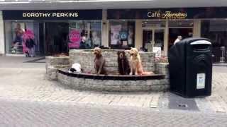 Advanced Class Training In Plymouth 2 - Take The Lead Dog Training Ltd