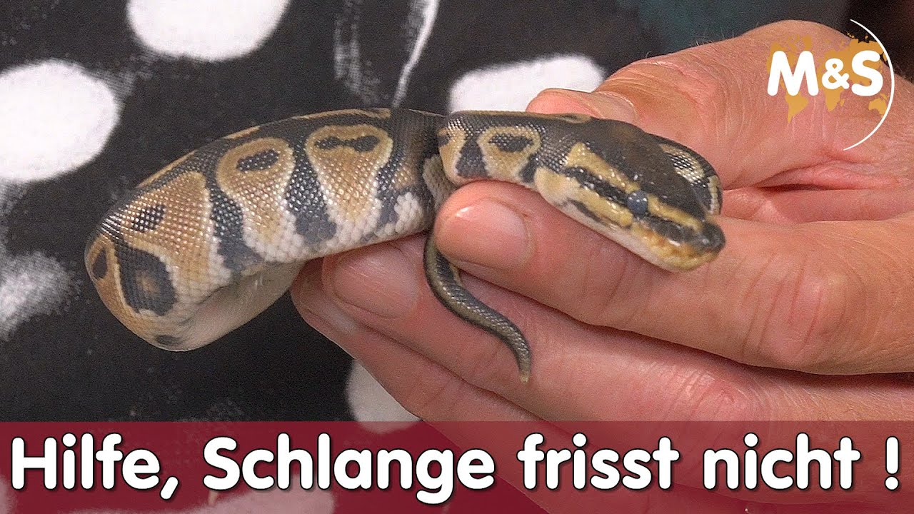 Welche tiere fressen schlangen