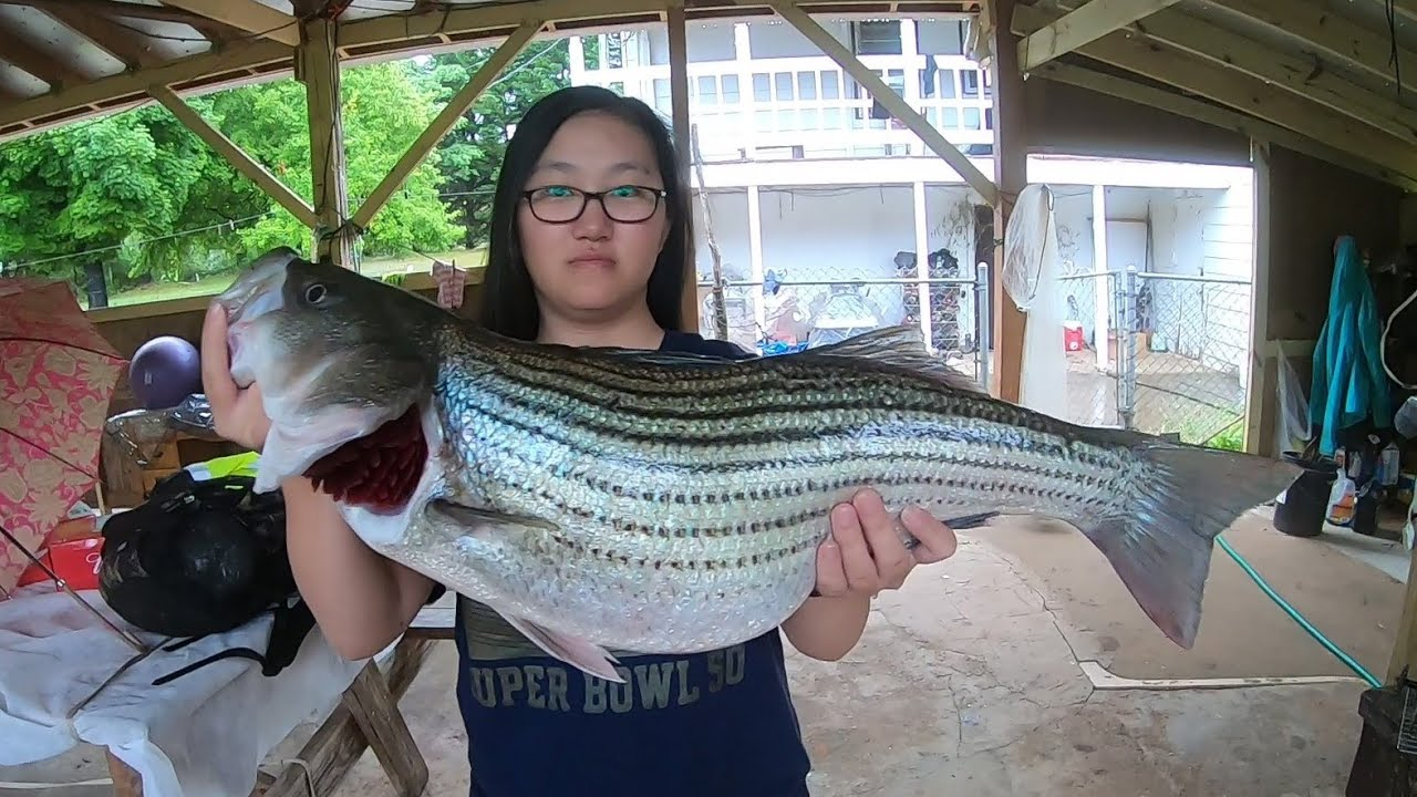 Lake Hickory Striped Bass Fishing (Top Water)Part1