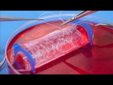 Scientists Transplant Lab-Made Sexual Organs