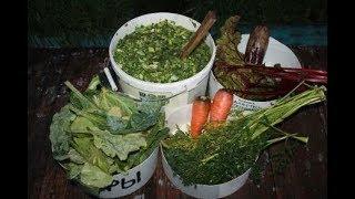 Выгодный чудо корм для кур несушек своими руками.