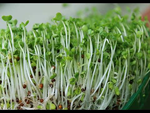 Broccoli Sprouts Sulforaphane Benefits & Depression with Rho