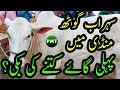 First Cows Jori SOLD in Sohrab Goth Cow Mandi 2019 Karachi   Kitne Ki Sale Hui? Bakra Eid 2019