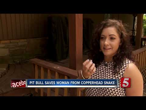 Hilary - Pit bull saves owner from copperhead