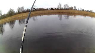 щука 5.150 кг.открытие сезона рыбалки весной.2015 LYDEKA(щука 5.150 кг.открытие сезона рыбалки весной.2015 отчетное видео., 2015-04-26T19:14:56.000Z)