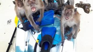 Monkey Beach - Koh Phi Phi Don, Thailand
