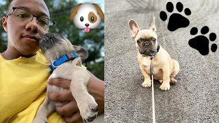 Day In The Life Of My French Bulldog!!
