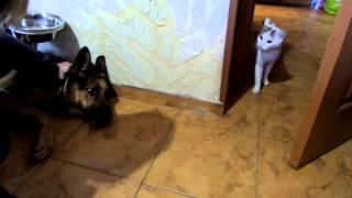 Дрессировка собак. Как кошка с собакой.