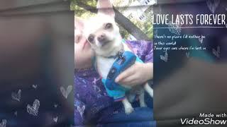 История любви собаки и девушки😍❤