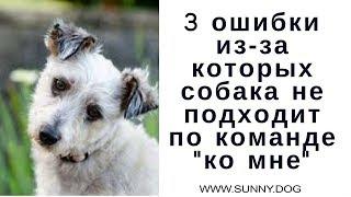 """3 ошибки из-за которых собака не подходит к хозяину по команде """"ко мне"""". Непослушание собаки."""
