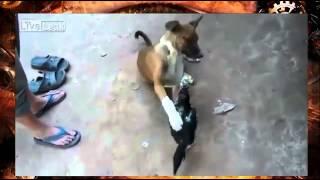 Прикол. Бой собака с петухом смотреть всем