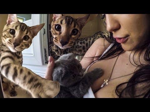 Вопрос: Кошки могут умирать от тараканов Известны такие случаи?
