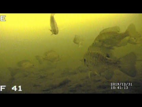 BASS, BLUEGILLS & PERCH | Ice Fishing With UNDERWATER CAMERA
