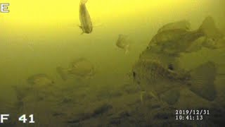 BASS BLUEGILLS PERCH Ice Fishing with UNDERWATER CAMERA