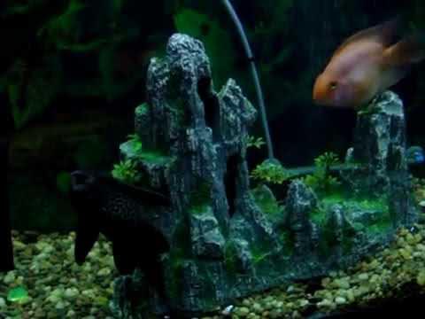 Freshwater 10 and 45 gallon tropical Aquarium w babies