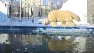 Пензенский зоопарк зима © Aleksey Aleshkin