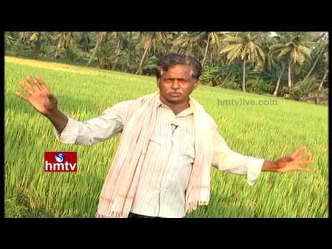 Ideal Farmer Earn High Profits From Multi Crops Cultivation | Nela Talli | HMTV