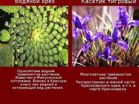 Растения занесенные в красную книгу.