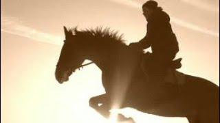 Розовое вино / Клип про лошадей / Конный спорт