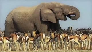 животные поют