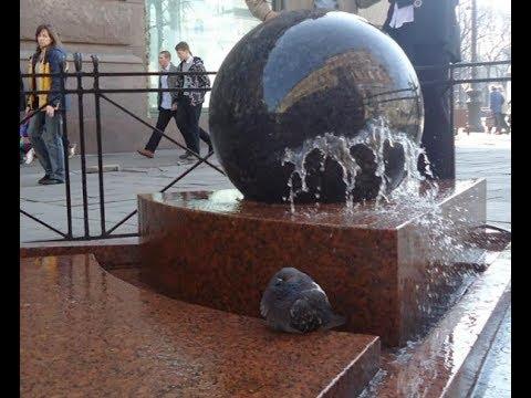 Смотреть Весна. В Петербурге запустили первые фонтаны. онлайн