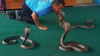 Шоу со змеями Тайланд