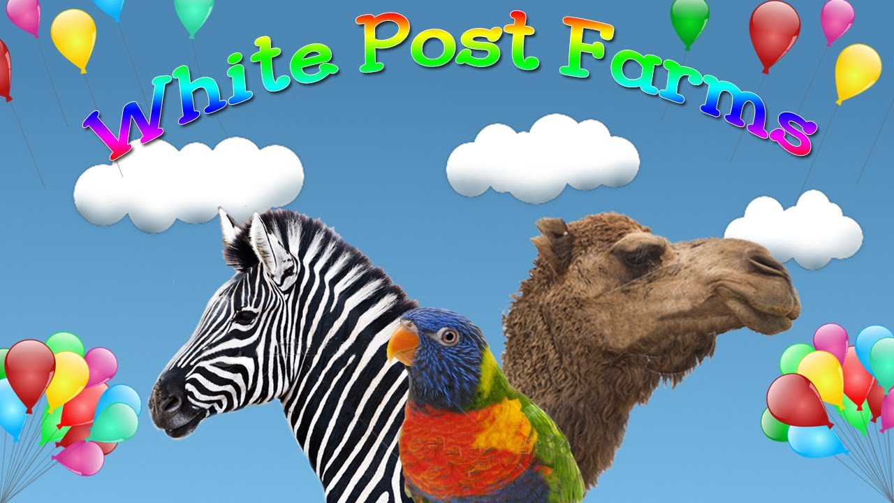 Coupons for white post farms melville