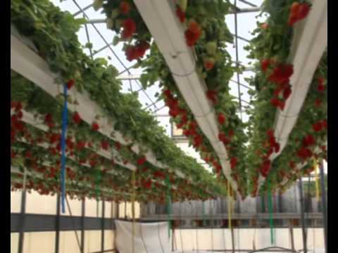 Palestinian Farmers Attend Israeli Agricultural Exhibition