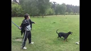 Dobermann My Dog 2 Cleopatra