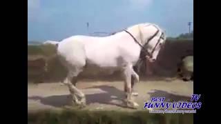 Конь Марширует под Музыку - Лошади - Лучшие Видео(Конь марширует в ритм музыки! ПРИЯТНОГО ПРОСМОТРА! ссылка на видео http://youtu.be/Gy4w7JH12ws ТАКЖЕ РЕКОМЕНДУЕМ ПОСМО..., 2015-01-05T20:11:58.000Z)