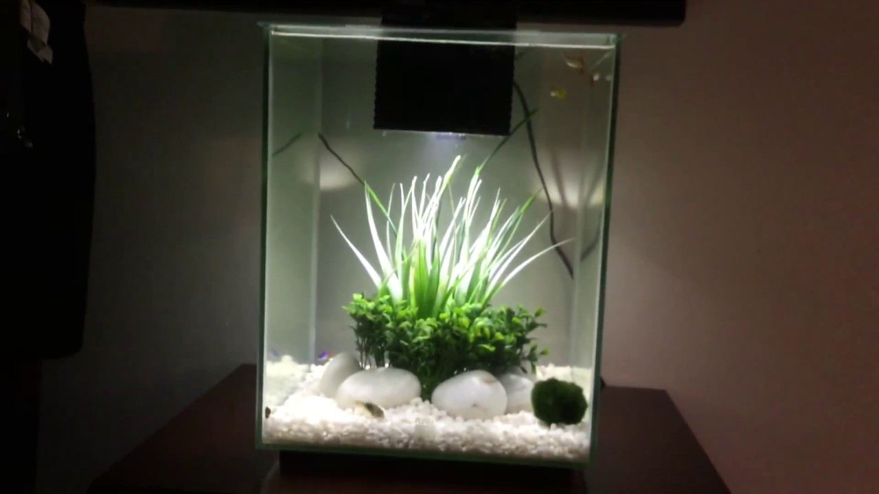 Fluval Chi 5 Gallon Fish Tank