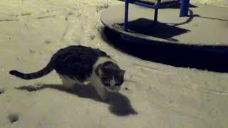Кошачьи  истории.Первый снег