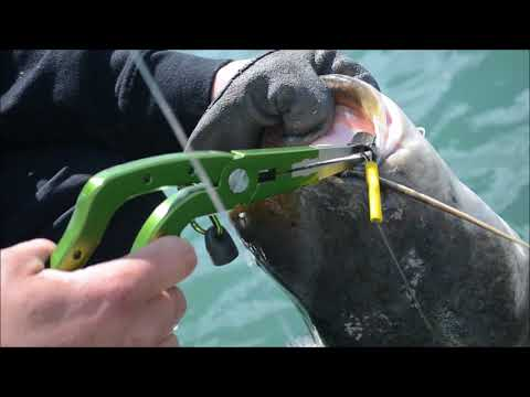 Zeck Angeln Lösezange Unhooking Pliers Catfish 23cm