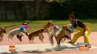 Dogs jumping rope set record