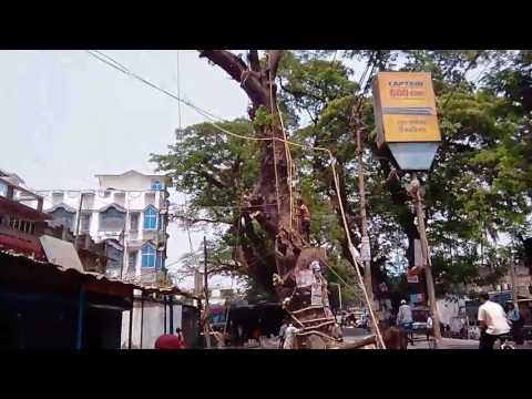 Tree On Jessor Road   Big Tree on jessor road nh 35  big tree on jessor road nh 35 indo bangladesh
